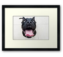 Pit Bulls are so ferocious! Framed Print
