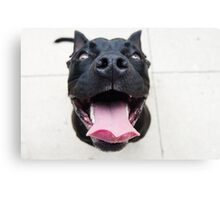 Pit Bulls are so ferocious! Canvas Print
