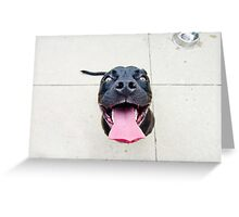 Pit bull smiles! Greeting Card