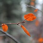 Winter Leaves by Tracy Jones