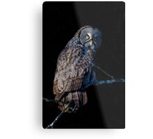 Spotlit - Great Grey Owl Metal Print