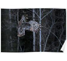Hover - Great Grey Owl Poster