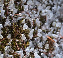 Icy Moss by Tracy Jones