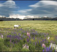 Spirit Pony in a High country Lupine Field by Wayne King
