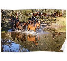 Horse reflections Poster