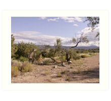 Arizona Wilderness  Art Print
