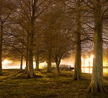 Ghostly Trees Along A Lake by cjohn4043