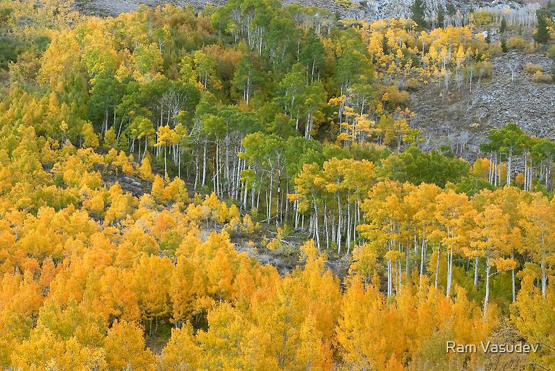 Wild and Beautiful - Aspens In Autumn Eastern Sierra California by Ram Vasudev