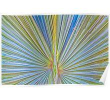 Palm Frond - Bismarckia Palm Madagascar Poster