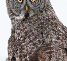 Great Grey Owl  Sticker