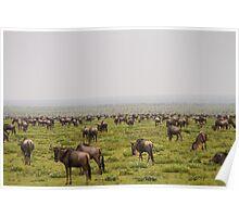 Wildebeest Migration Poster