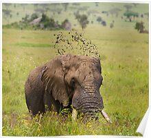Elephant mud bath Poster