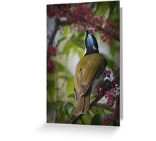 Blue face honey eater Greeting Card