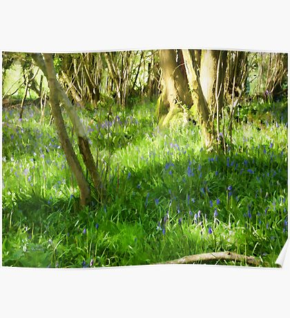 Spring Afternoon with Bluebells Poster
