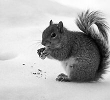 Nut al Fresco by Bine