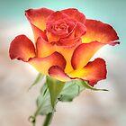 ROSE by Pete Klimek