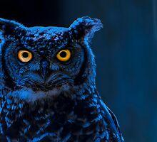 Moonlight Owl by MMPhotographyUK