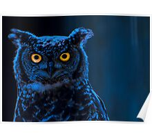 Moonlight Owl Poster