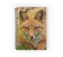 American Red Fox Spiral Notebook