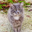 A friendly straycat by DebbyScott