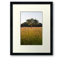 Phoenix Park Framed Print
