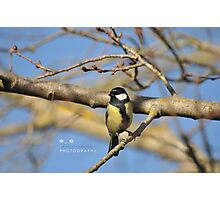 """ Avian Dawn "" (The Great Tit) Photographic Print"