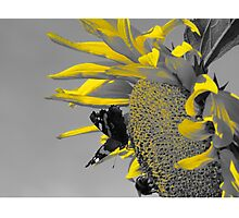 Nectar and Pollen Gatherers Photographic Print