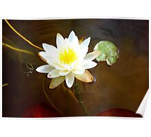 Lilly pad. Poster