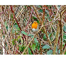Heart of the Thicket Photographic Print