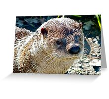 American Otter Greeting Card