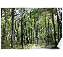 Robinhoods forest Poster