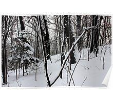 Solo pine in winter wonderland. Poster