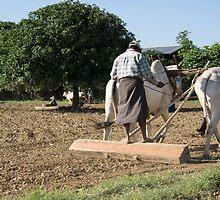 the farmer by Anne Scantlebury