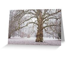 Platan Tree in Early Winter Greeting Card