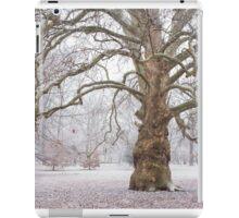 Platan Tree in Early Winter iPad Case/Skin