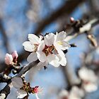 Blooming Trees! by FFRPhoto