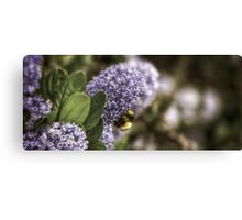 The Bumble Canvas Print