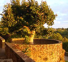 Fortress Tree At Sunset In Le Dorat by Menega  Sabidussi