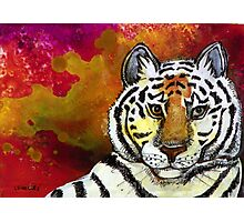 Sunrise Tiger Photographic Print