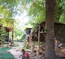 backyard by Anne Scantlebury