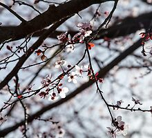Lighted Blossoms by FFRPhoto