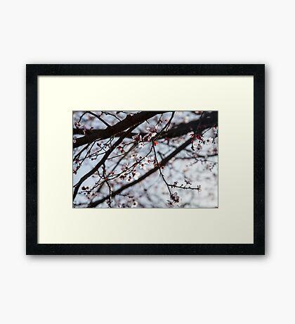 Lighted Blossoms Framed Print