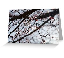 Lighted Blossoms Greeting Card
