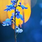 Wildflower Macro Case by Jonicool