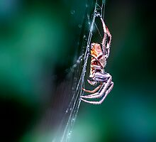 Itsy Bitsy.... by Tracie Louise