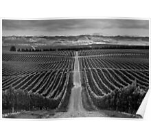 Yealands Vineyard Poster