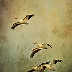 White Pelicans Cell Case by Jonicool