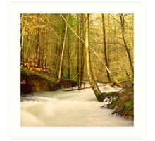 Forrest of Dean River Art Print