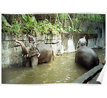 Bali zoo Poster