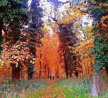 Autumn in Thetford Forest by SaraHardman
